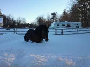 Meagn and her mom's horse Jack in the snow on Wednesday